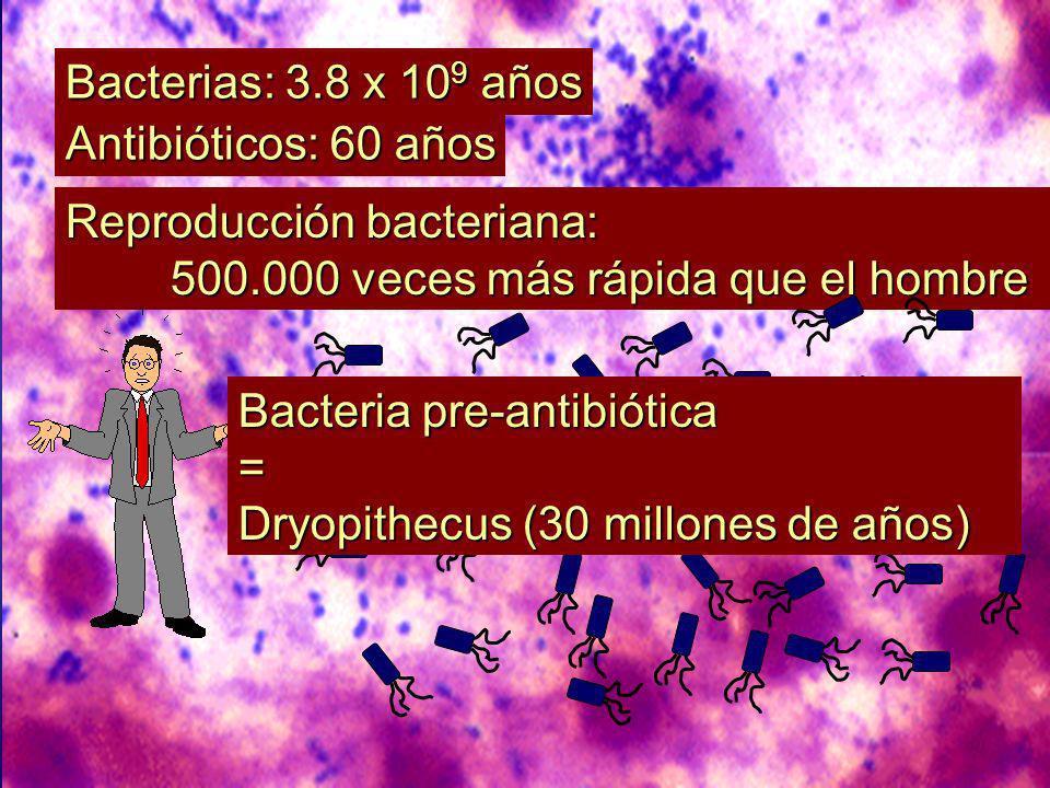 Reproducción bacteriana: 500.000 veces más rápida que el hombre Bacterias: 3.8 x 10 9 años Antibióticos: 60 años Bacteria pre-antibiótica = Dryopithecus (30 millones de años)