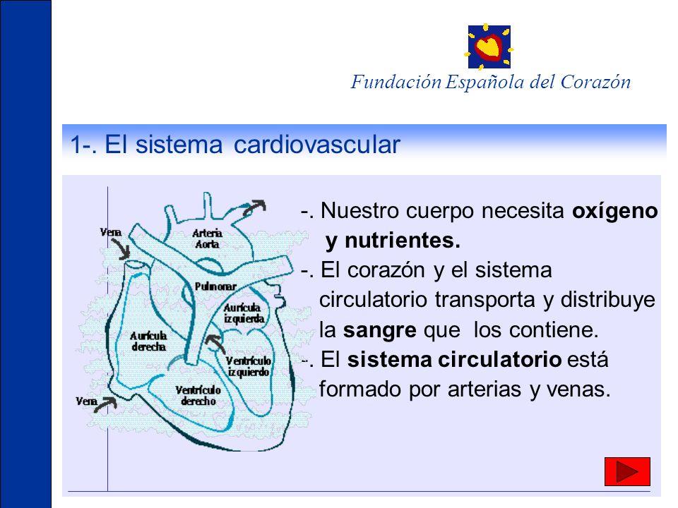 1-. El sistema cardiovascular -. Nuestro cuerpo necesita oxígeno y nutrientes. -. El corazón y el sistema circulatorio transporta y distribuye la sang