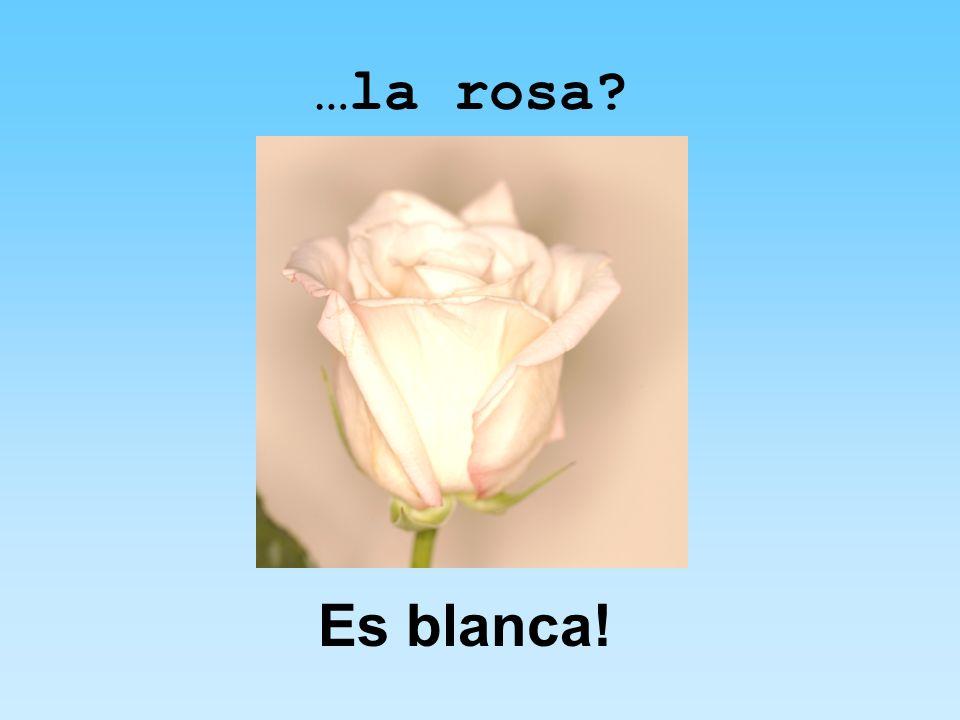 …la rosa Es blanca!
