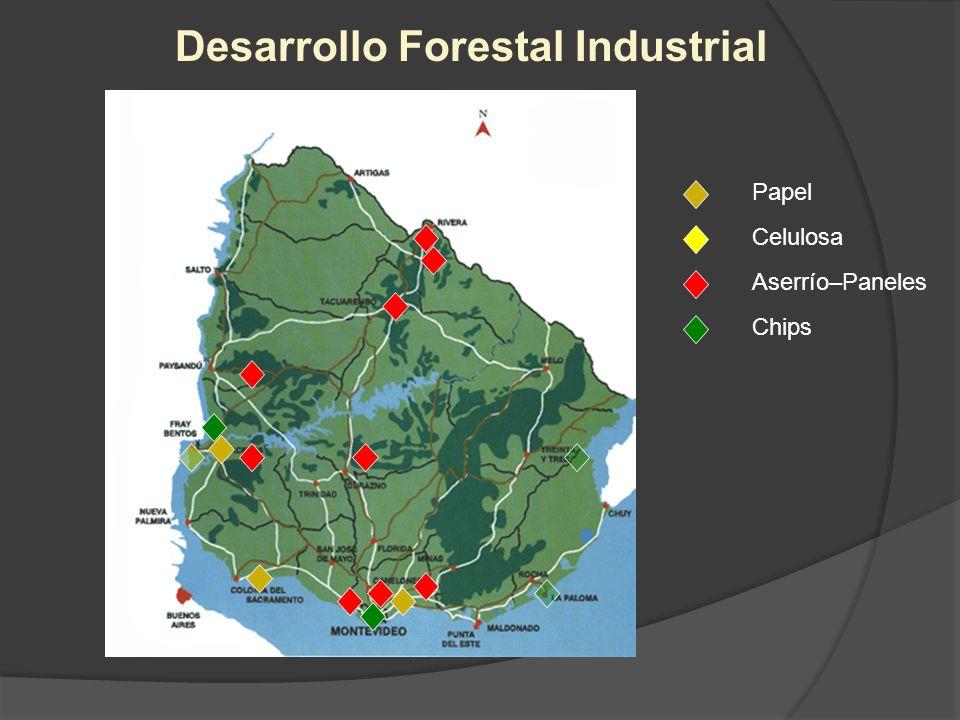 Papel Celulosa Aserrío–Paneles Chips Desarrollo Forestal Industrial