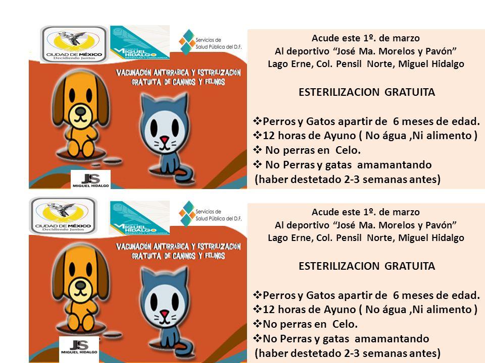 Acude este 1º. de marzo Al deportivo José Ma. Morelos y Pavón Lago Erne, Col. Pensil Norte, Miguel Hidalgo ESTERILIZACION GRATUITA Perros y Gatos apar