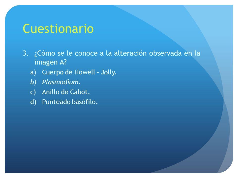 Cuestionario 4.¿De qué están constituidos.