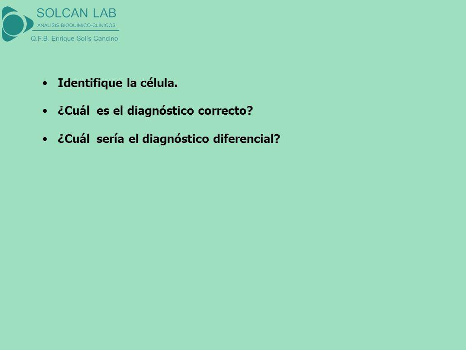 Identifique la célula. ¿Cuál es el diagnóstico correcto? ¿Cuál sería el diagnóstico diferencial?