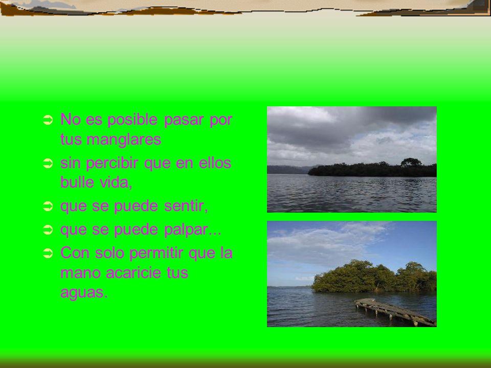 No es posible pasar por tus manglares sin percibir que en ellos bulle vida, que se puede sentir, que se puede palpar... Con solo permitir que la mano