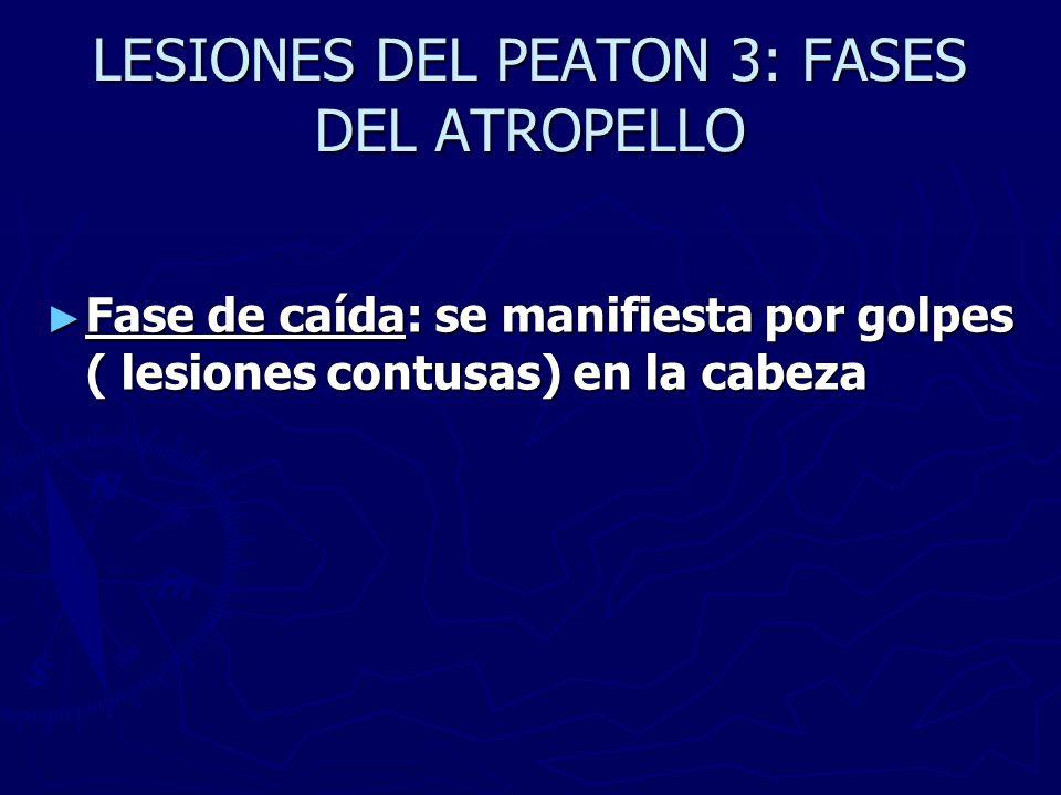 LESIONES DEL PEATON 3: FASES DEL ATROPELLO Fase de caída: se manifiesta por golpes ( lesiones contusas) en la cabeza Fase de caída: se manifiesta por