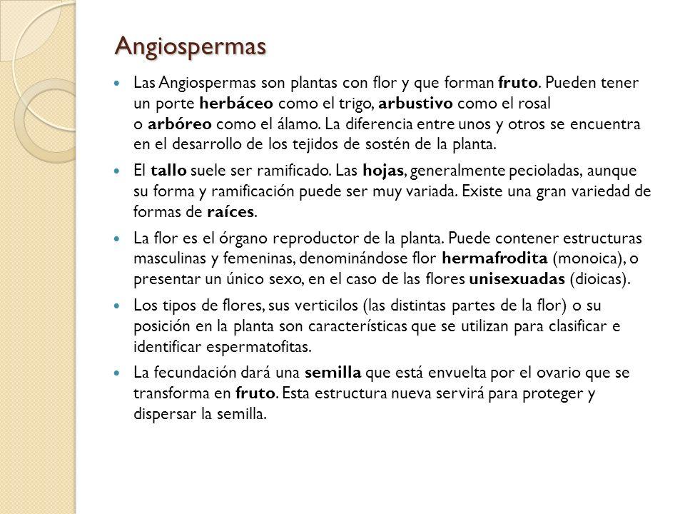 Angiospermas Las Angiospermas son plantas con flor y que forman fruto. Pueden tener un porte herbáceo como el trigo, arbustivo como el rosal o arbóreo