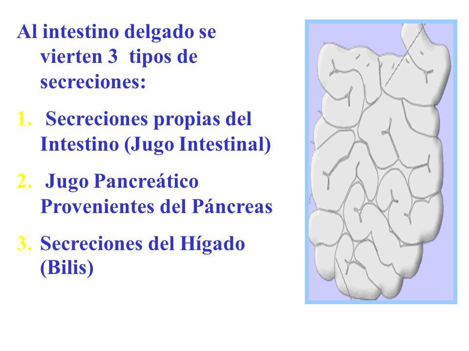 Al intestino delgado se vierten 3 tipos de secreciones: 1. Secreciones propias del Intestino (Jugo Intestinal) 2. Jugo Pancreático Provenientes del Pá