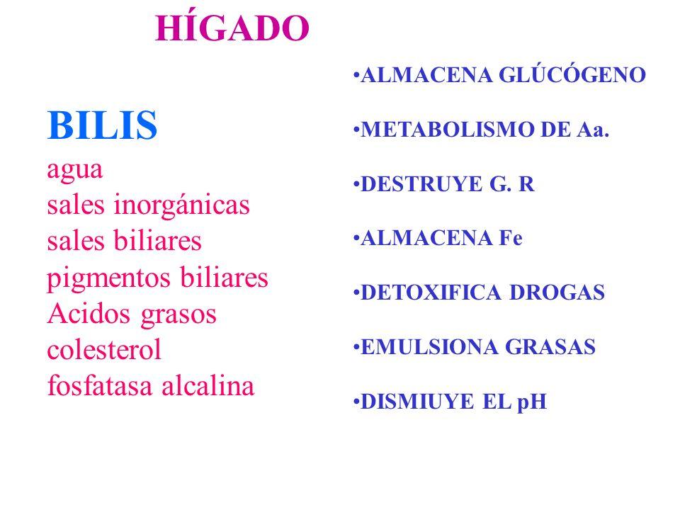 HÍGADO BILIS agua sales inorgánicas sales biliares pigmentos biliares Acidos grasos colesterol fosfatasa alcalina ALMACENA GLÚCÓGENO METABOLISMO DE Aa