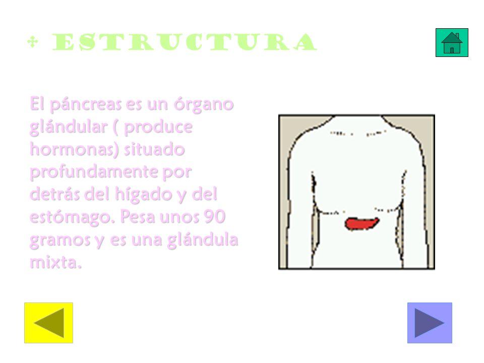 Estructura El páncreas es un órgano glándular ( produce hormonas) situado profundamente por detrás del hígado y del estómago. Pesa unos 90 gramos y es