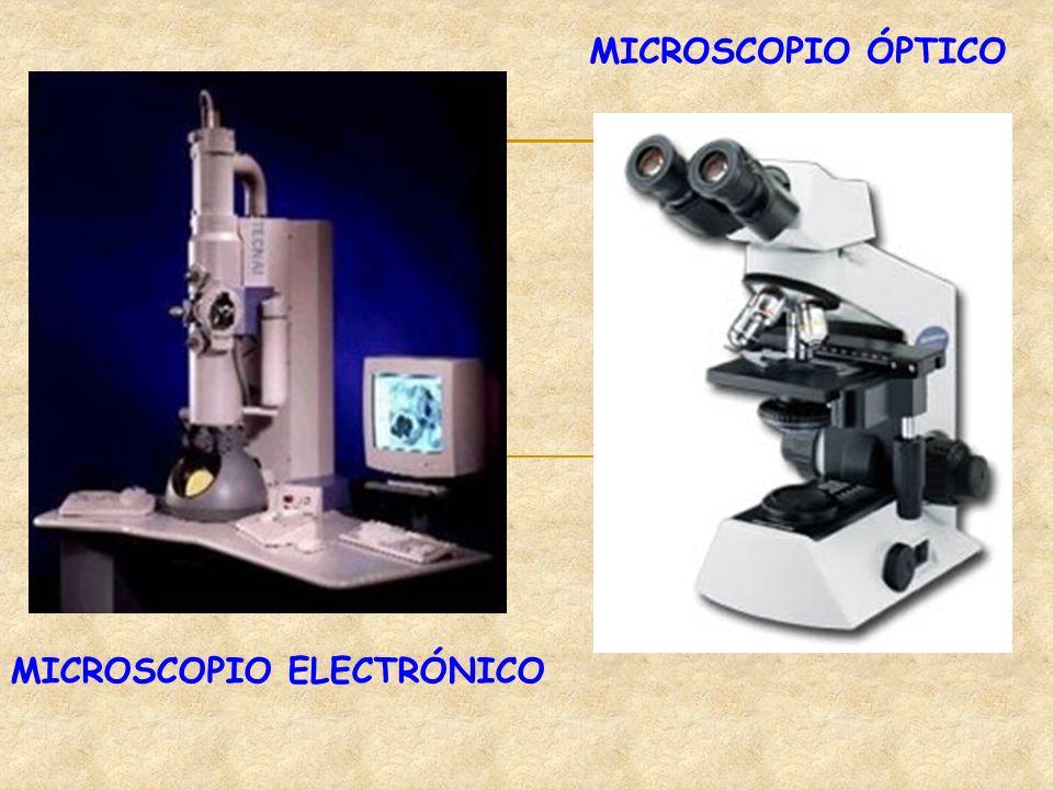 MICROSCOPIO ELECTRÓNICO MICROSCOPIO ÓPTICO