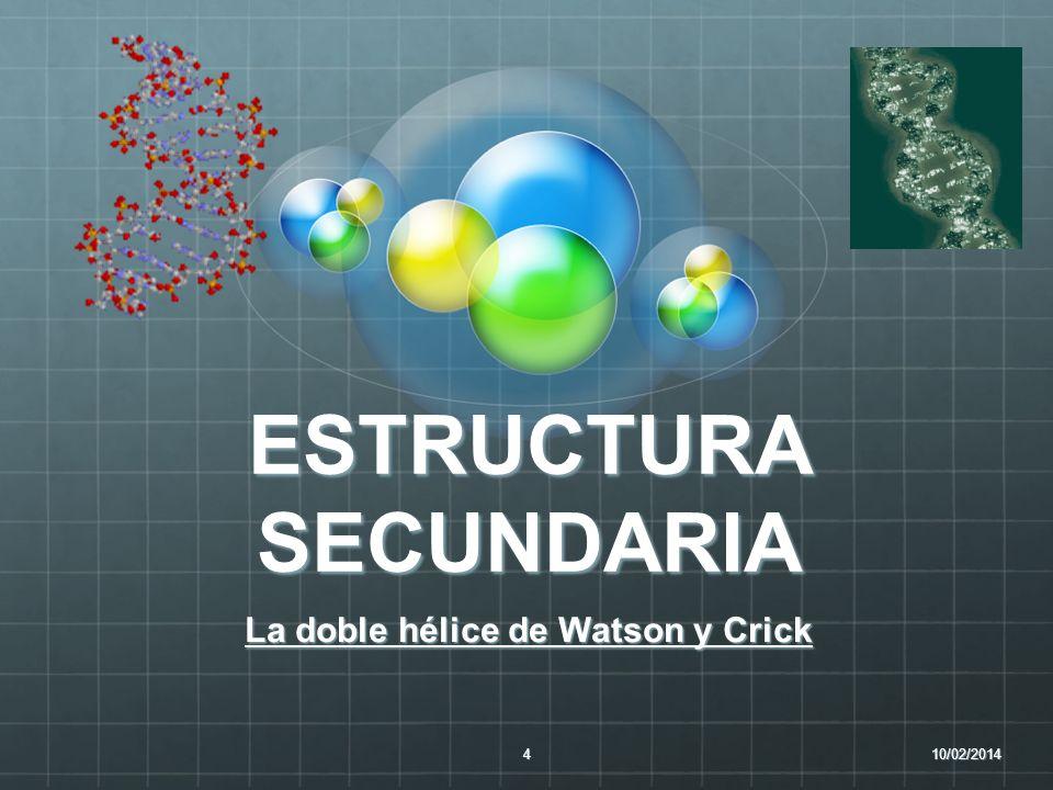 ESTRUCTURA SECUNDARIA La doble hélice de Watson y Crick 10/02/20144