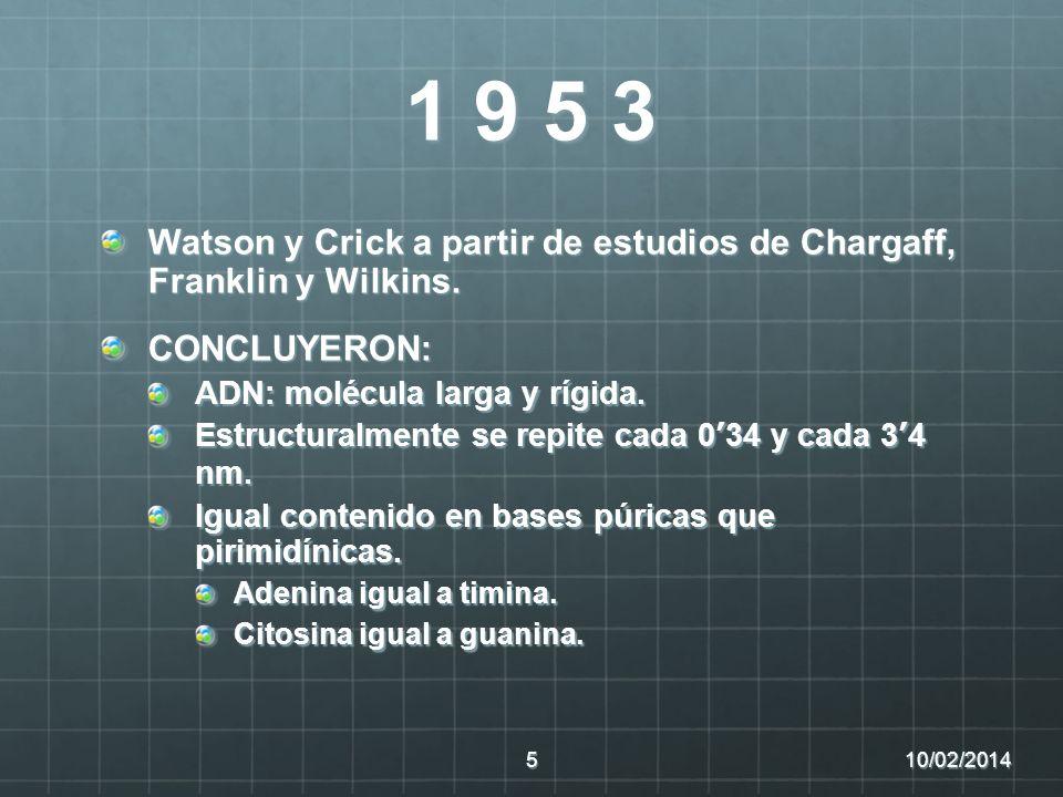 1 9 5 3 Watson y Crick a partir de estudios de Chargaff, Franklin y Wilkins. CONCLUYERON: ADN: molécula larga y rígida. Estructuralmente se repite cad