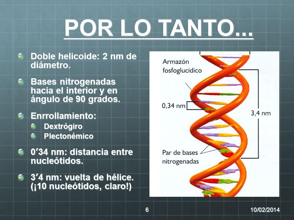 COMPLEMENTARIEDAD DE BASES Siempre una base púrica con una pirimidínica Citosina-guanina (3) Adenina – timina (2) Las cadenas son antiparalelas (enlaces 5 3 orientados en sentidos opuestos) 10/02/20147