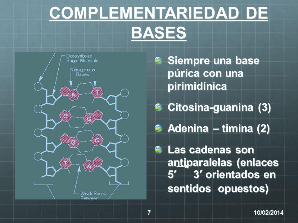 COMPLEMENTARIEDAD DE BASES Siempre una base púrica con una pirimidínica Citosina-guanina (3) Adenina – timina (2) Las cadenas son antiparalelas (enlac