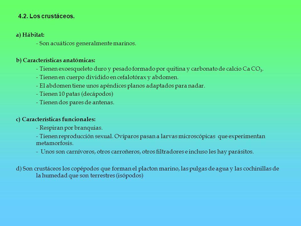 4.2. Los crustáceos. a) Hábitat: - Son acuáticos generalmente marinos. b) Características anatómicas: - Tienen exoesqueleto duro y pesado formado por