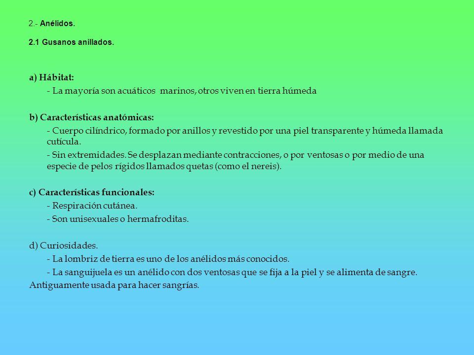 2.- Anélidos. 2.1 Gusanos anillados. a) Hábitat: - La mayoría son acuáticos marinos, otros viven en tierra húmeda b) Características anatómicas: - Cue
