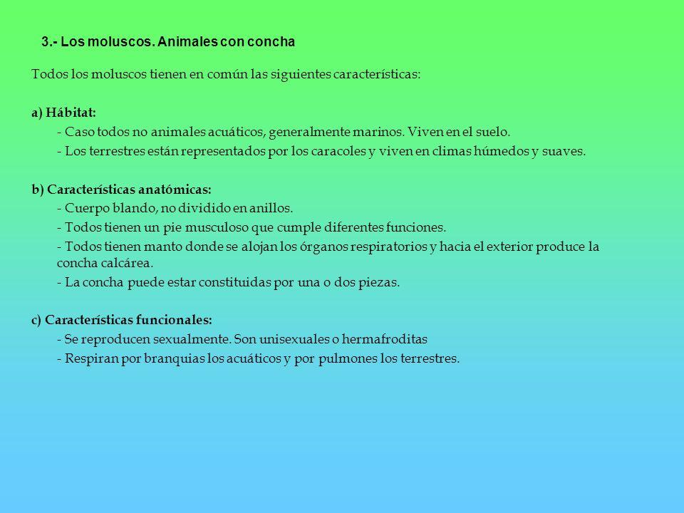 3.- Los moluscos. Animales con concha Todos los moluscos tienen en común las siguientes características: a) Hábitat: - Caso todos no animales acuático