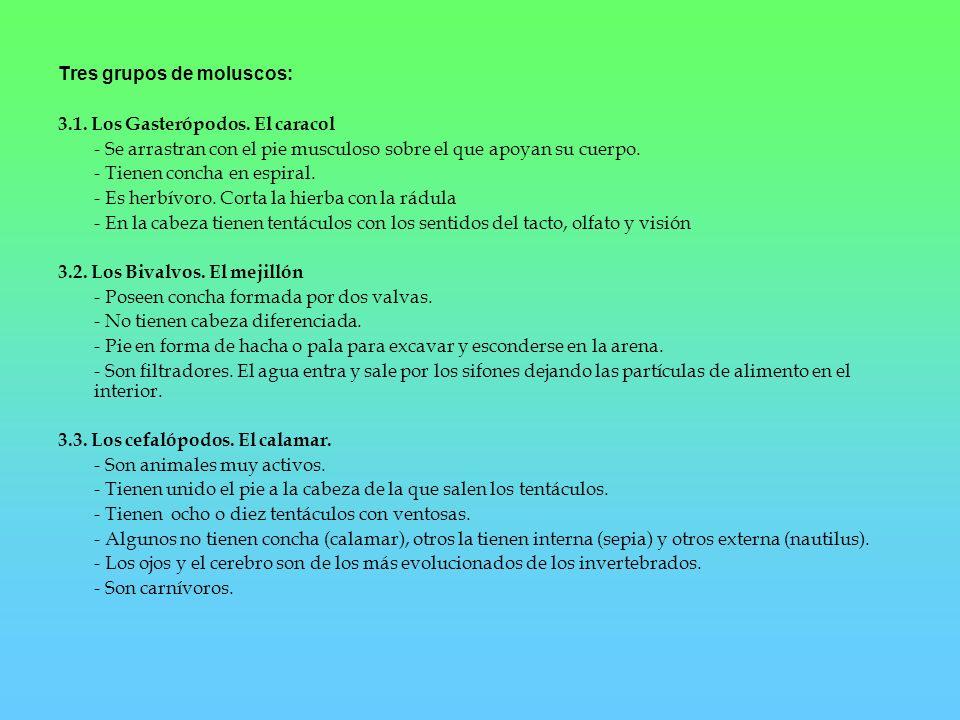 4.- Los artrópodos.a) Hábitat: - Están presentes en todos los hábitats de la Tierra.