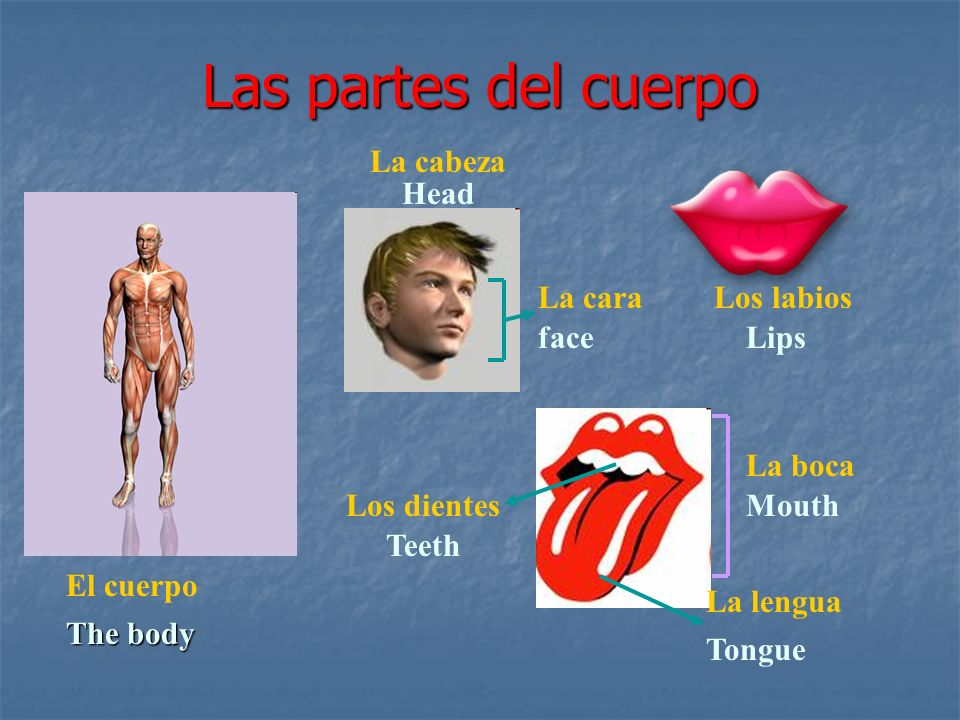 Las partes del cuerpo El cuerpo The body Los labios Lips Los dientes Teeth La lengua Tongue La cabeza Head La cara face La boca Mouth