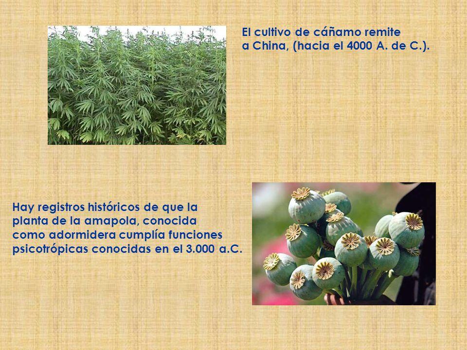 El cultivo de cáñamo remite a China, (hacia el 4000 A. de C.). Hay registros históricos de que la planta de la amapola, conocida como adormidera cumpl