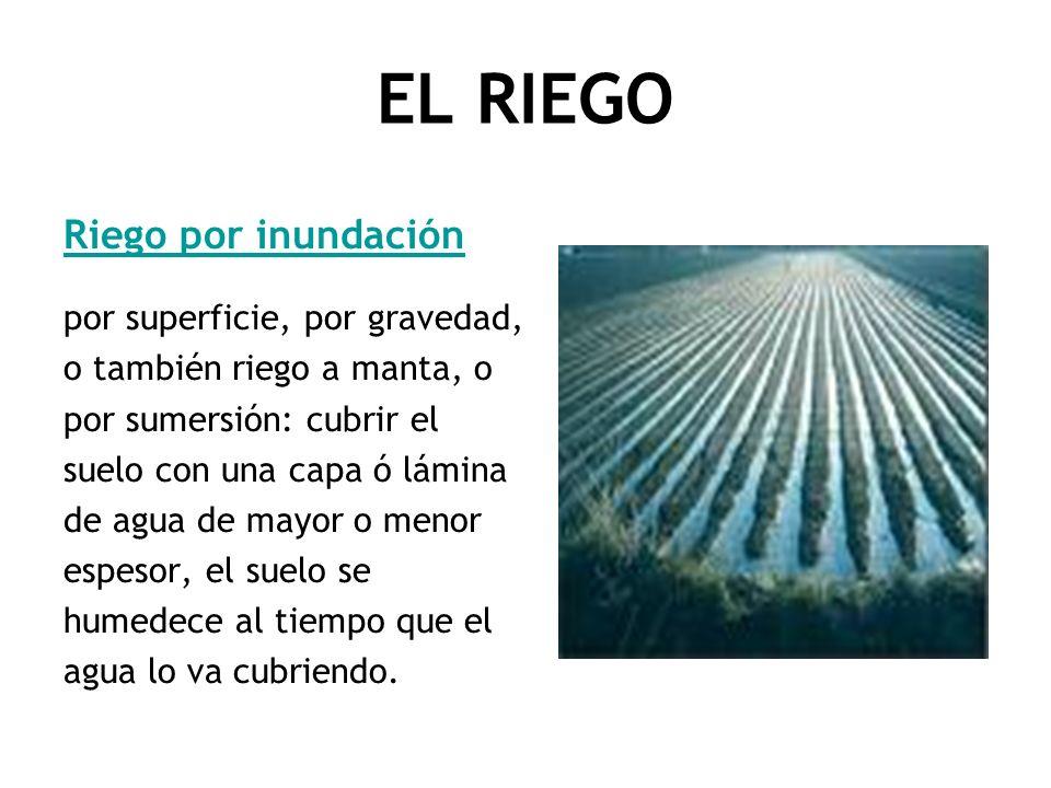 EL RIEGO Riego por inundación por superficie, por gravedad, o también riego a manta, o por sumersión: cubrir el suelo con una capa ó lámina de agua de