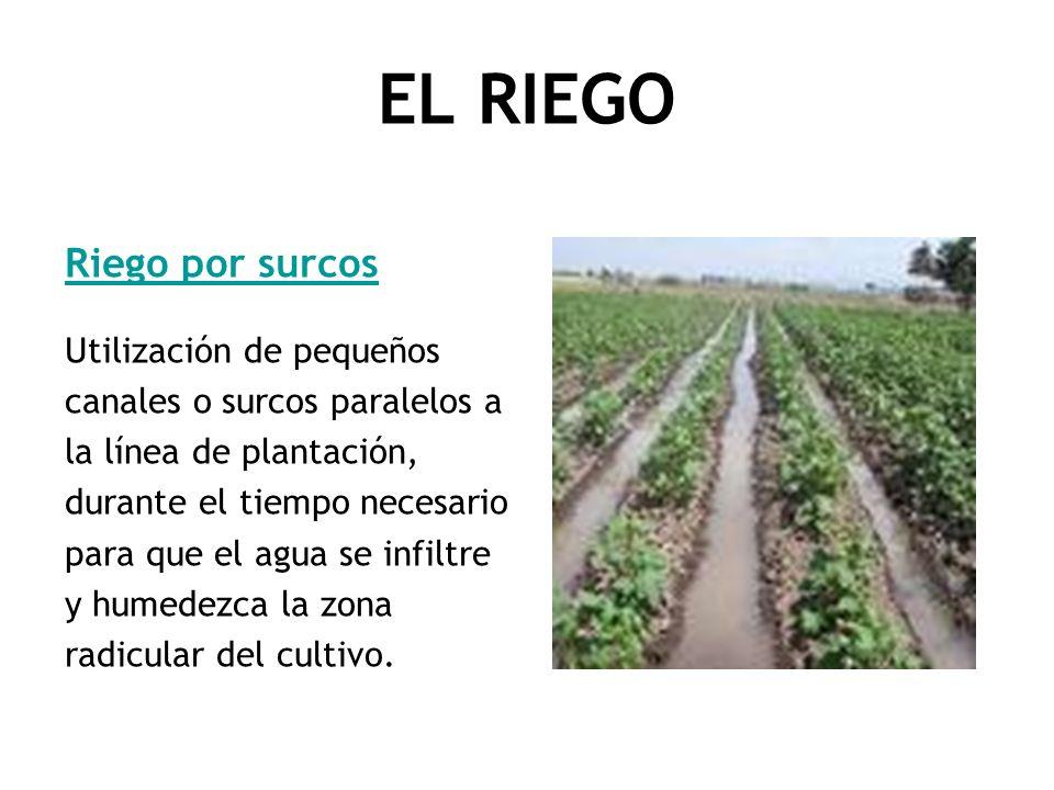 EL RIEGO Riego por surcos Utilización de pequeños canales o surcos paralelos a la línea de plantación, durante el tiempo necesario para que el agua se