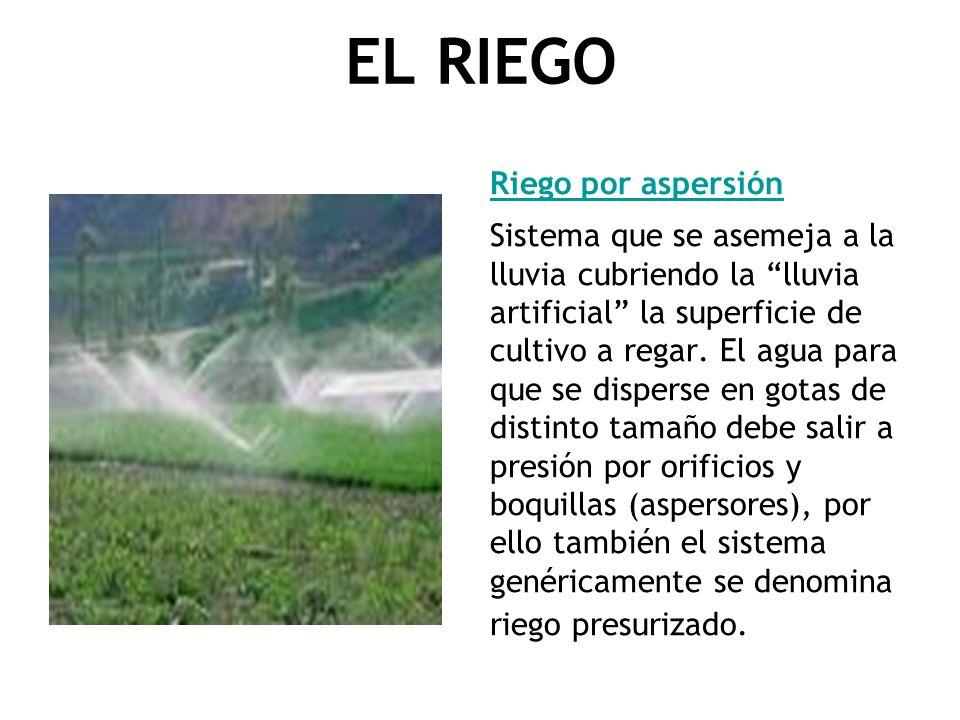 EL RIEGO Riego por aspersión Sistema que se asemeja a la lluvia cubriendo la lluvia artificial la superficie de cultivo a regar. El agua para que se d