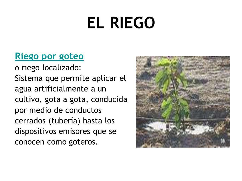 EL RIEGO Riego por goteo o riego localizado: Sistema que permite aplicar el agua artificialmente a un cultivo, gota a gota, conducida por medio de con