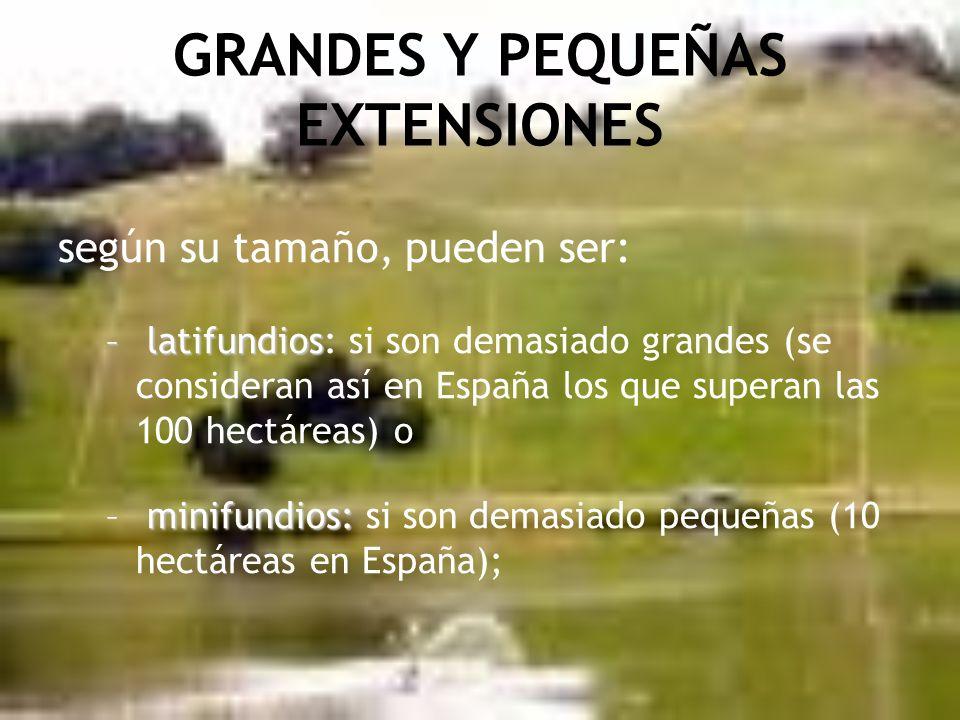 GRANDES Y PEQUEÑAS EXTENSIONES según su tamaño, pueden ser: – latifundios – latifundios: si son demasiado grandes (se consideran así en España los que