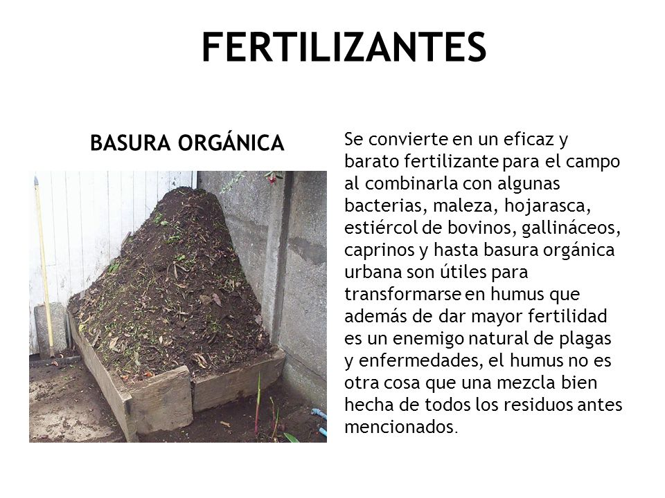 FERTILIZANTES BASURA ORGÁNICA Se convierte en un eficaz y barato fertilizante para el campo al combinarla con algunas bacterias, maleza, hojarasca, es