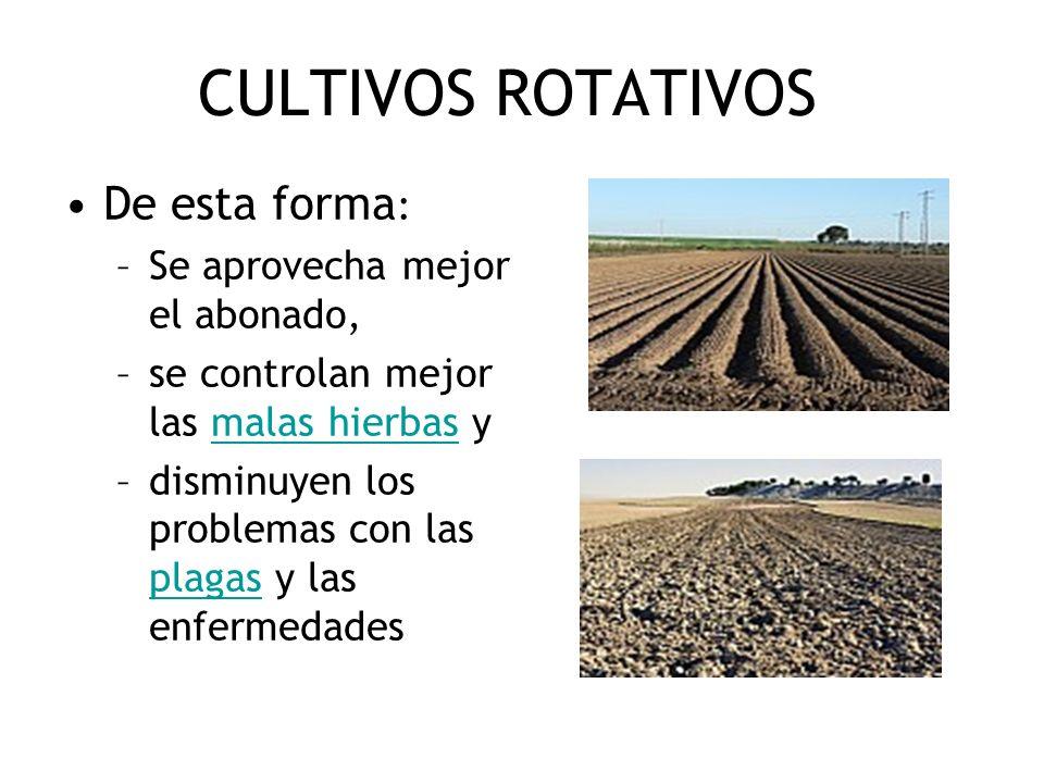 CULTIVOS ROTATIVOS De esta forma : –Se aprovecha mejor el abonado, –se controlan mejor las malas hierbas ymalas hierbas –disminuyen los problemas con