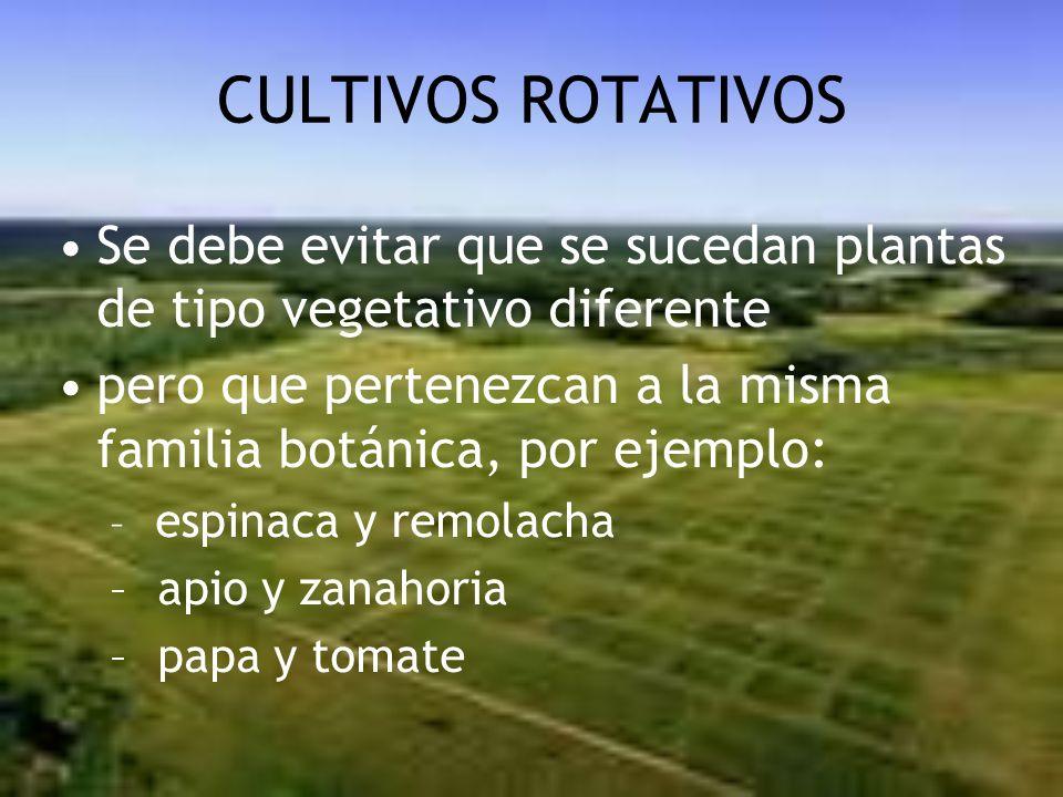 CULTIVOS ROTATIVOS Se debe evitar que se sucedan plantas de tipo vegetativo diferente pero que pertenezcan a la misma familia botánica, por ejemplo: –
