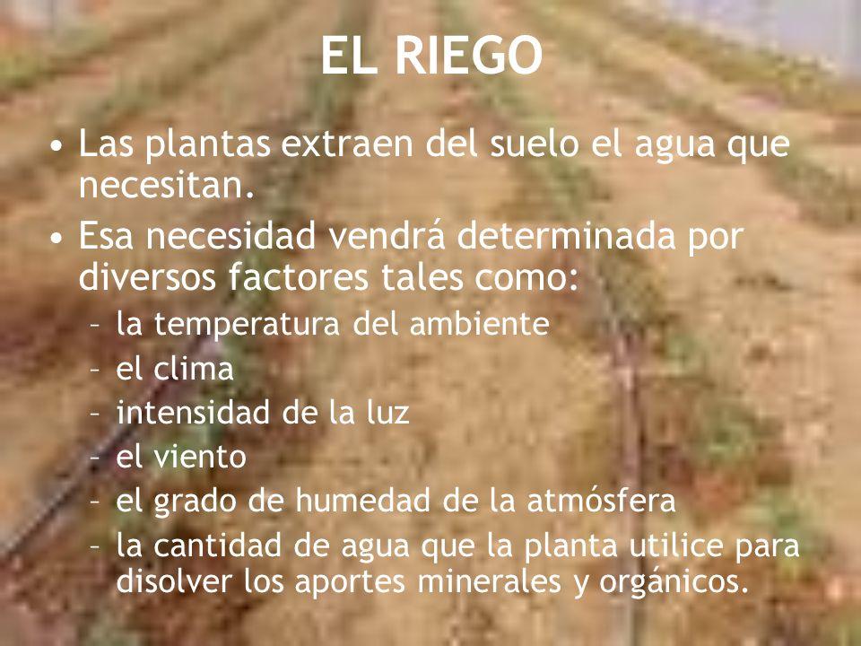 EL RIEGO Las plantas extraen del suelo el agua que necesitan. Esa necesidad vendrá determinada por diversos factores tales como: –la temperatura del a