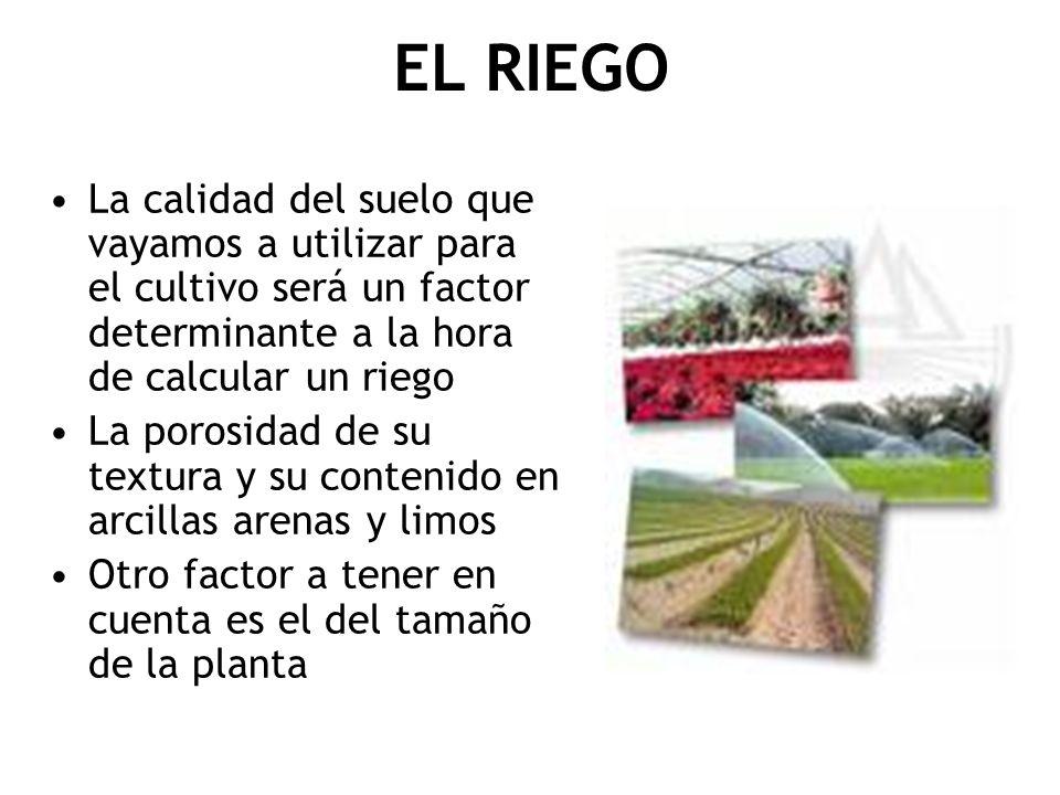 EL RIEGO La calidad del suelo que vayamos a utilizar para el cultivo será un factor determinante a la hora de calcular un riego La porosidad de su tex