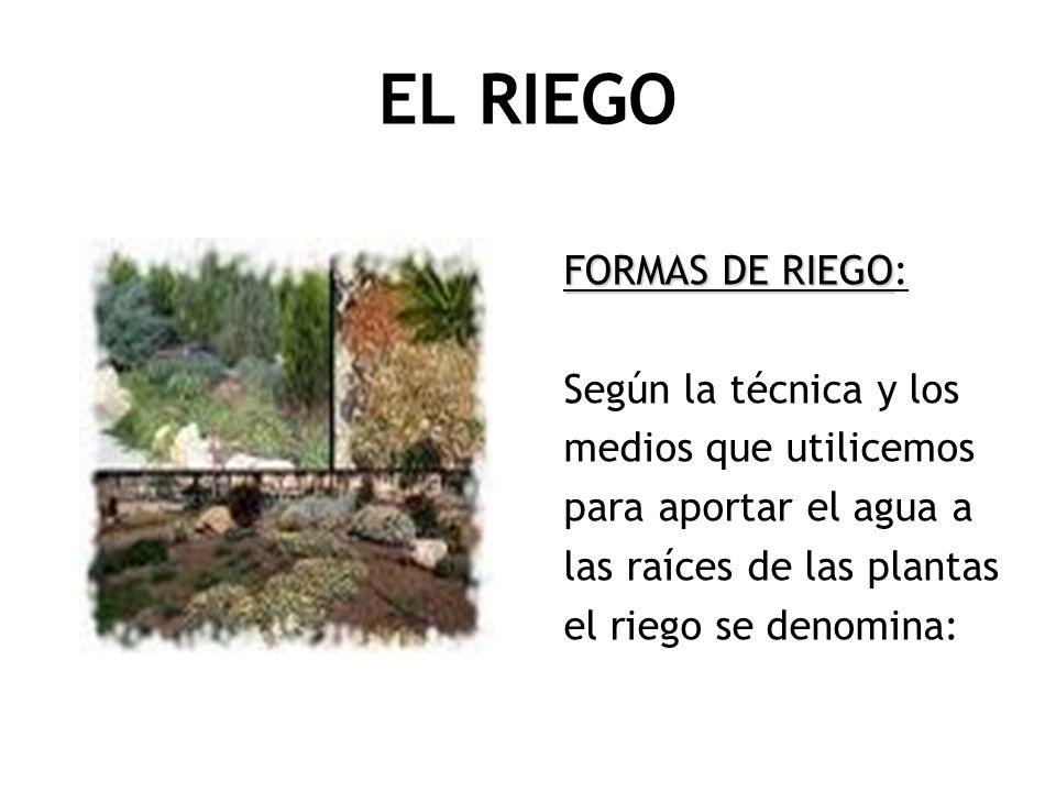 EL RIEGO FORMAS DE RIEGO FORMAS DE RIEGO: Según la técnica y los medios que utilicemos para aportar el agua a las raíces de las plantas el riego se de