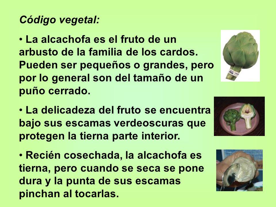 Código vegetal: La alcachofa es el fruto de un arbusto de la familia de los cardos. Pueden ser pequeños o grandes, pero por lo general son del tamaño