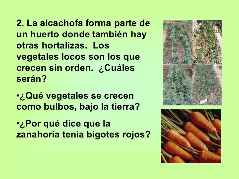 2. La alcachofa forma parte de un huerto donde también hay otras hortalizas. Los vegetales locos son los que crecen sin orden. ¿Cuáles serán? ¿Qué veg