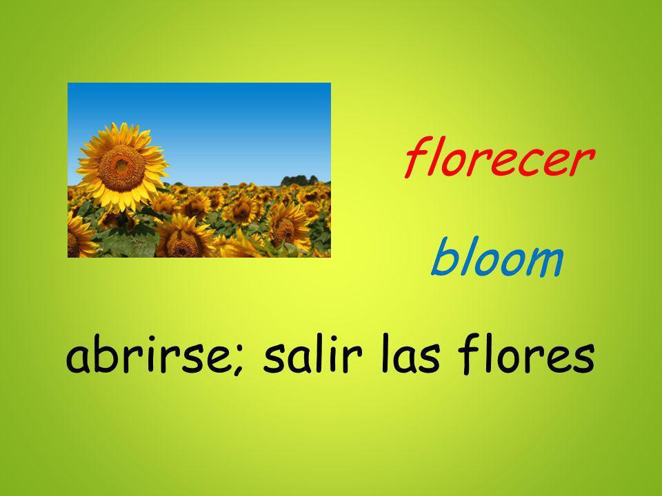 florecer abrirse; salir las flores bloom