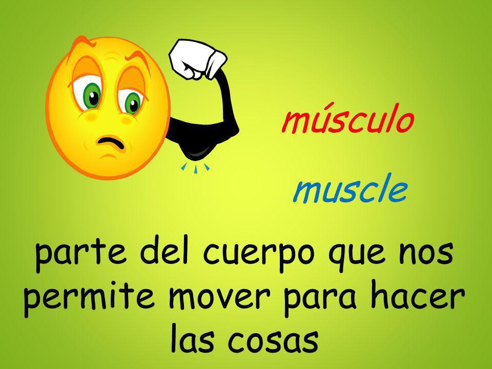 músculo parte del cuerpo que nos permite mover para hacer las cosas muscle