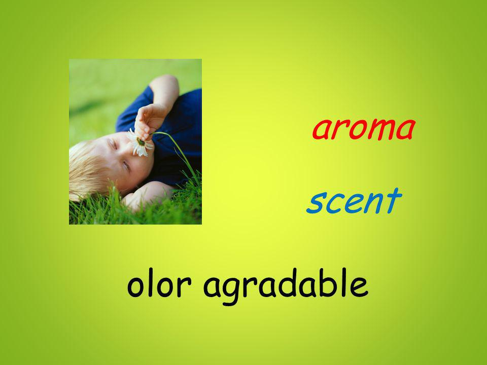 aroma olor agradable scent