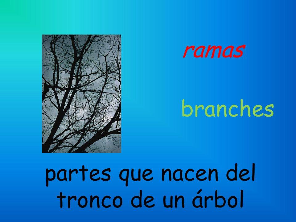 ramas partes que nacen del tronco de un árbol branches