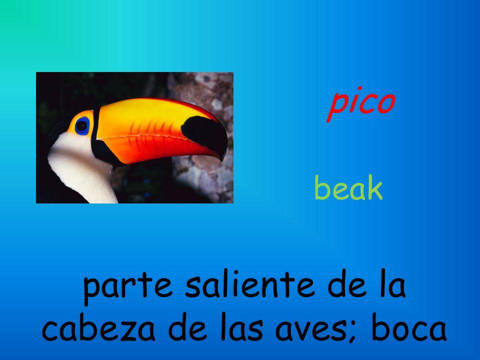 pico parte saliente de la cabeza de las aves; boca beak