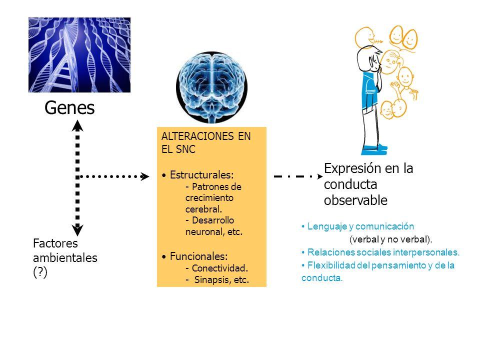 ALTERACIONES EN EL SNC Estructurales: - Patrones de crecimiento cerebral. - Desarrollo neuronal, etc. Funcionales: - Conectividad. - Sinapsis, etc. Fa