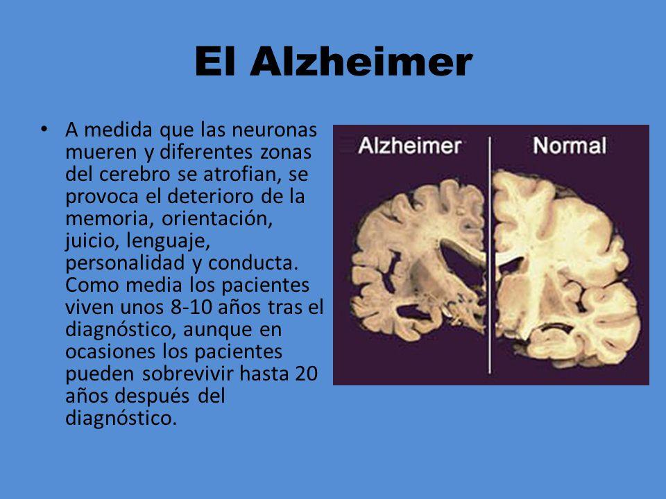 El Alzheimer A medida que las neuronas mueren y diferentes zonas del cerebro se atrofian, se provoca el deterioro de la memoria, orientación, juicio,