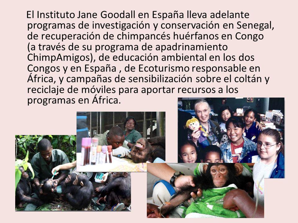 El Instituto Jane Goodall en España lleva adelante programas de investigación y conservación en Senegal, de recuperación de chimpancés huérfanos en Co