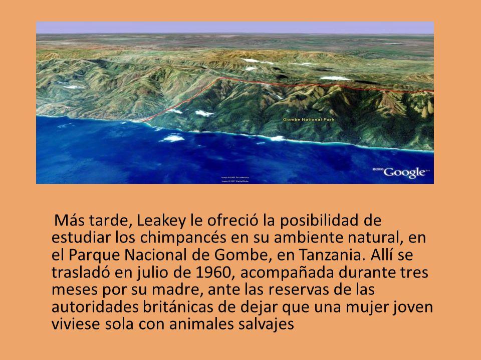Más tarde, Leakey le ofreció la posibilidad de estudiar los chimpancés en su ambiente natural, en el Parque Nacional de Gombe, en Tanzania. Allí se tr