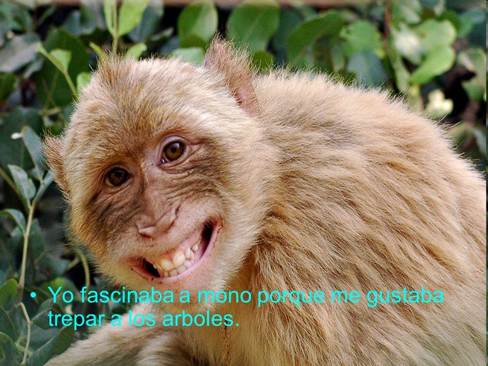 Yo fascinaba a mono porque me gustaba trepar a los arboles.