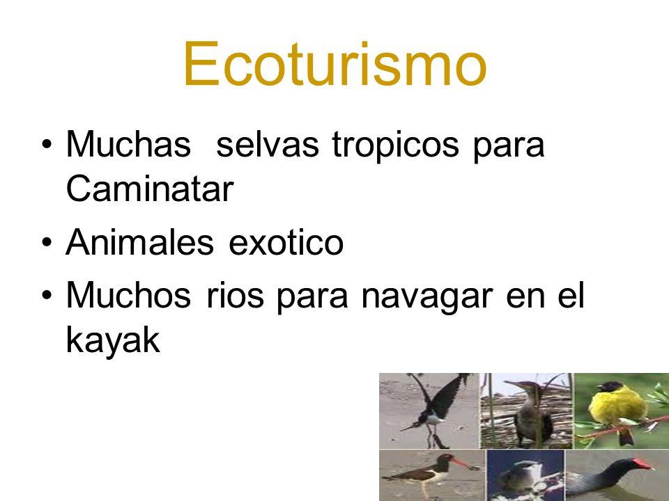 Ecoturismo Muchas selvas tropicos para Caminatar Animales exotico Muchos rios para navagar en el kayak