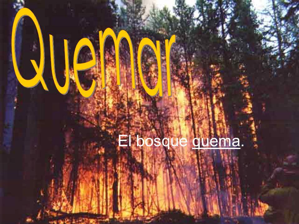 El bosque quema.