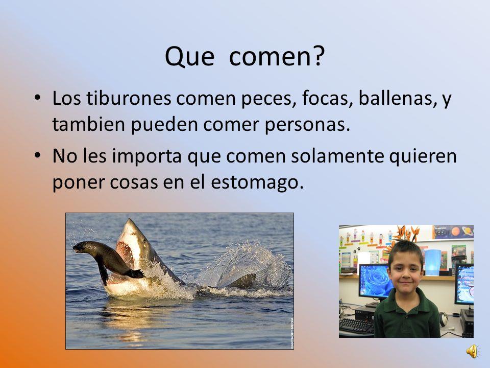Los tiburones comen peces, focas, ballenas, y tambien pueden comer personas.
